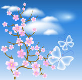 Flowering tree against a background of clouds Stock Photo