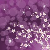 Flowering tree background. Includes Transparencies Royalty Free Stock Photo