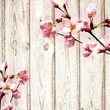 Flowering tree on the background of a wooden wall. Royalty Free Stock Photo