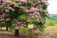 Flowering tree. Is a big, beautiful garden in the spring stock image