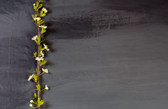 Flowering tree branches on black. Dark gray coal colors backgr. Pop art. Flowering tree branches on black. Dark gray coal colors background with apple-tree Stock Photography