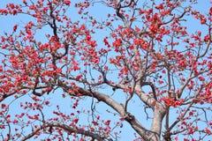 Flowering Tree Stock Image