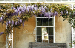 Flowering tree on the facade of country house Royalty Free Stock Image