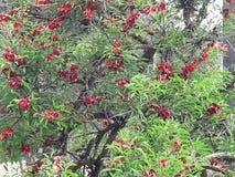 Flowering tree. In the garden of hboul meknes flowering tree Royalty Free Stock Photography