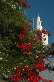 Flowering tree and greek church royalty free stock image