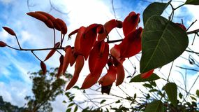 The Flowering Tree. Flowering tree green red nature royalty free stock image