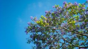Flowering tree Royalty Free Stock Photos