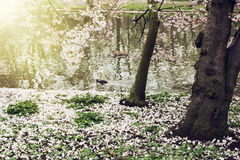 Flowering tree on the lake shore Stock Photography