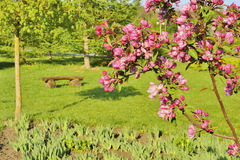 Flowering tree in the park Stock Image