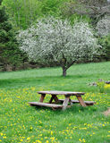 Flowering Tree with Picnic Table Royalty Free Stock Photo