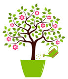 Flowering tree in pot Stock Images