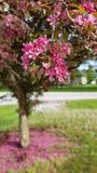 Flowering tree. Red, nature, outdoors stock images