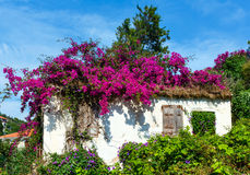 Flowering tree on the roof Royalty Free Stock Photography