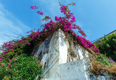 Flowering tree on the roof Royalty Free Stock Photo
