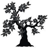 Flowering tree silhouette Royalty Free Stock Photo