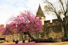 Flowering tree with wall as background Stock Images