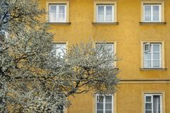 A flowering tree in Warsaw. Warsaw, Poland. April, 2018.  a flowering tree among the colorful houses of the old town royalty free stock images