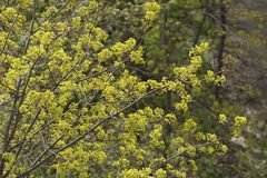 Flowering trees Stock Photography