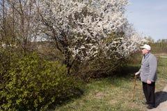 Flowering trees. Royalty Free Stock Photo