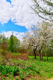 Flowering trees in autumn garden on a sunny day.  Stock Photography