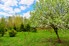 Flowering trees in autumn garden on a sunny day.  Stock Image