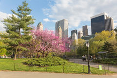 Flowering trees in Central Park, NYC Stock Images