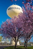 Flowering trees with the Meridian water tower Stock Photos