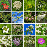Flowering trees and shrubs Royalty Free Stock Images