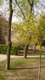 Flowering trees in spring. Flowering trees on the street in spring royalty free stock images