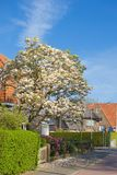 Flowering trees on the street of Europe. Beautiful spring. Blue sky. Travels. Flowering trees on the street of Europe. Beautiful spring. Blue sky. Travels Stock Photos