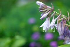 Flowering twig bells Stock Photo
