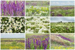 Flowering Ukrainian steppe. stock photo