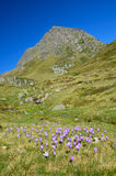 Flowering valley in the autumn Atlantic Pyrenees Stock Images