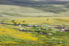 Flowering valley Ngorongoro Crater Conservation Area Royalty Free Stock Photos