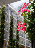 Flowering Vine with Balconies in Background Stock Photos