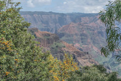 Flowering Waimea Canyon Stock Photo
