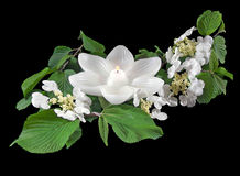 Flowering white crabapple branch with candle Royalty Free Stock Images
