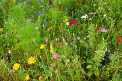 Herbal meadow Royalty Free Stock Photography