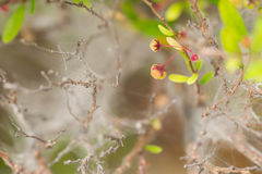 Flowering wild plant with spider web Stock Images