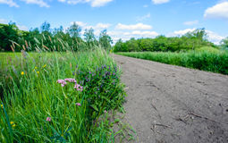 Flowering wild plants next to a sandy path Royalty Free Stock Photography