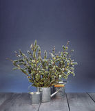 Flowering willow in the garden watering can. stock image
