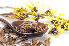 Flowering witch hazel (Hamamelis) and wooden spoon with dried le. Aves for homemade skin care cosmetics and bath additive on a white background, closeup with stock image