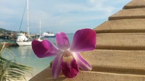Flowering world. Flower on the dock Royalty Free Stock Photo
