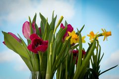 Flowering yellow irises and red tulips against the background of the spring sky. Bouquet for women`s holiday. Blooming flowers. Delicate fresh greenery of stock image