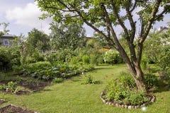 Flowering zucchini Royalty Free Stock Photos