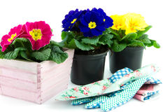 Floweringpot with primrose and garden utensils Stock Images