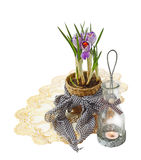 Flowerings striped crocuses Stock Photography