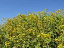 Flowerinsky. Yellow flower in the blu sky Stock Photography