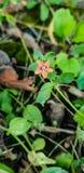 Flowerish stockbild