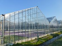 Floweriung plants in a glasshouse Stock Image